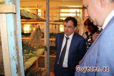 Baramaçılığın inkişafı üçün Qazaxda geniş imkanlar var