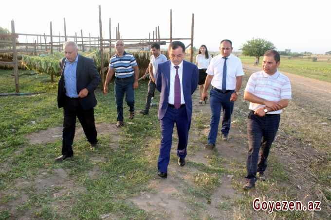 Qazaxda kənd təsərrüfatının inkişafı üçün hər cür şərait var