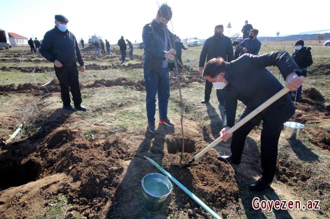 """Qazaxda """"Xocalıya ədalət!"""" kampaniyası çərçivəsində 613 ağac əkilib"""